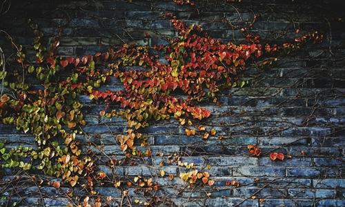 Bricks with Vines