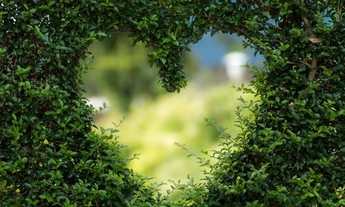 Hedge Heart